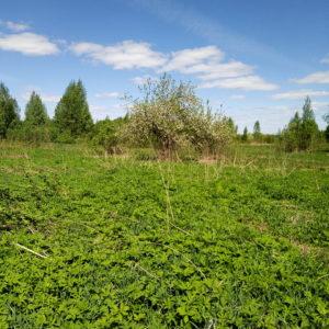 Земельный участок, Ярославская область, село Гзино